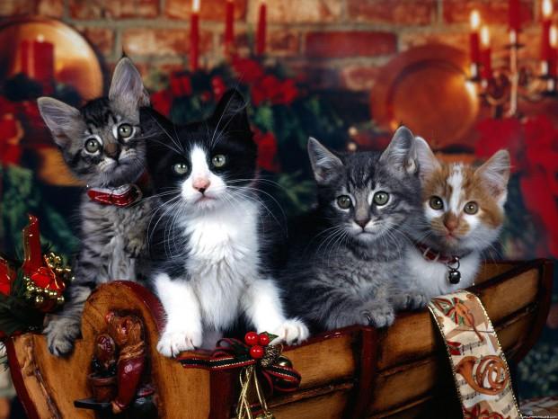 Velké kočičky ženy obrázky